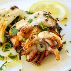 cuttlefish from the mediterranean