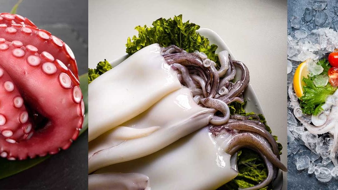 What is the difference between octopus, squid and cuttlefish ?