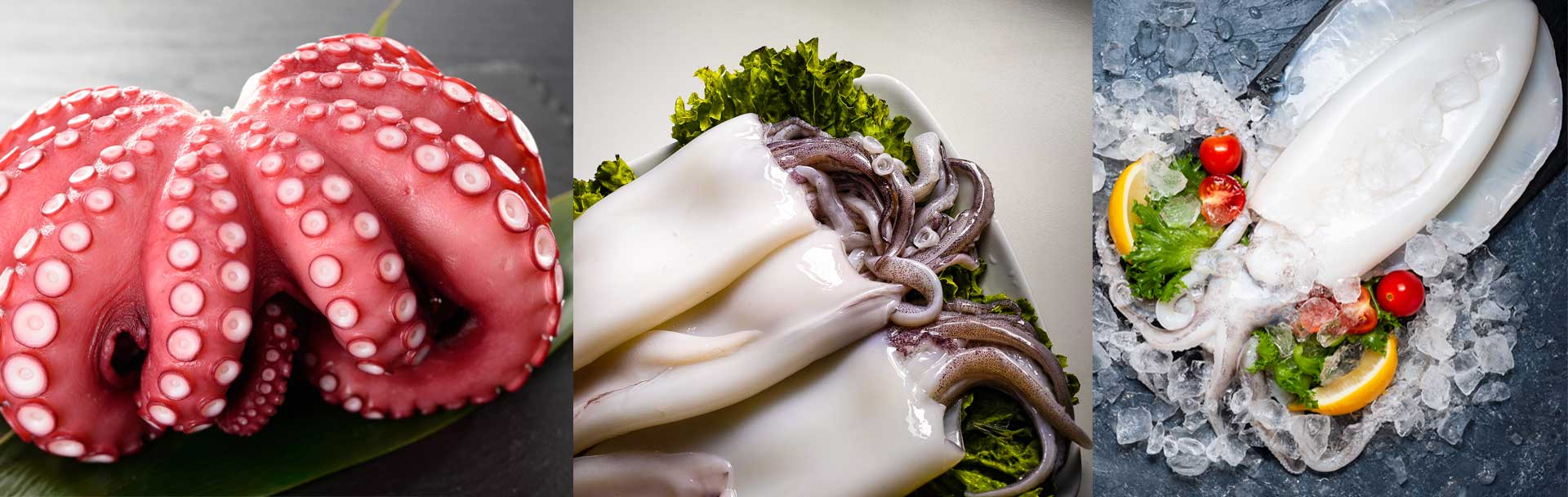 What is the difference between octopus squid and cuttlefish ?