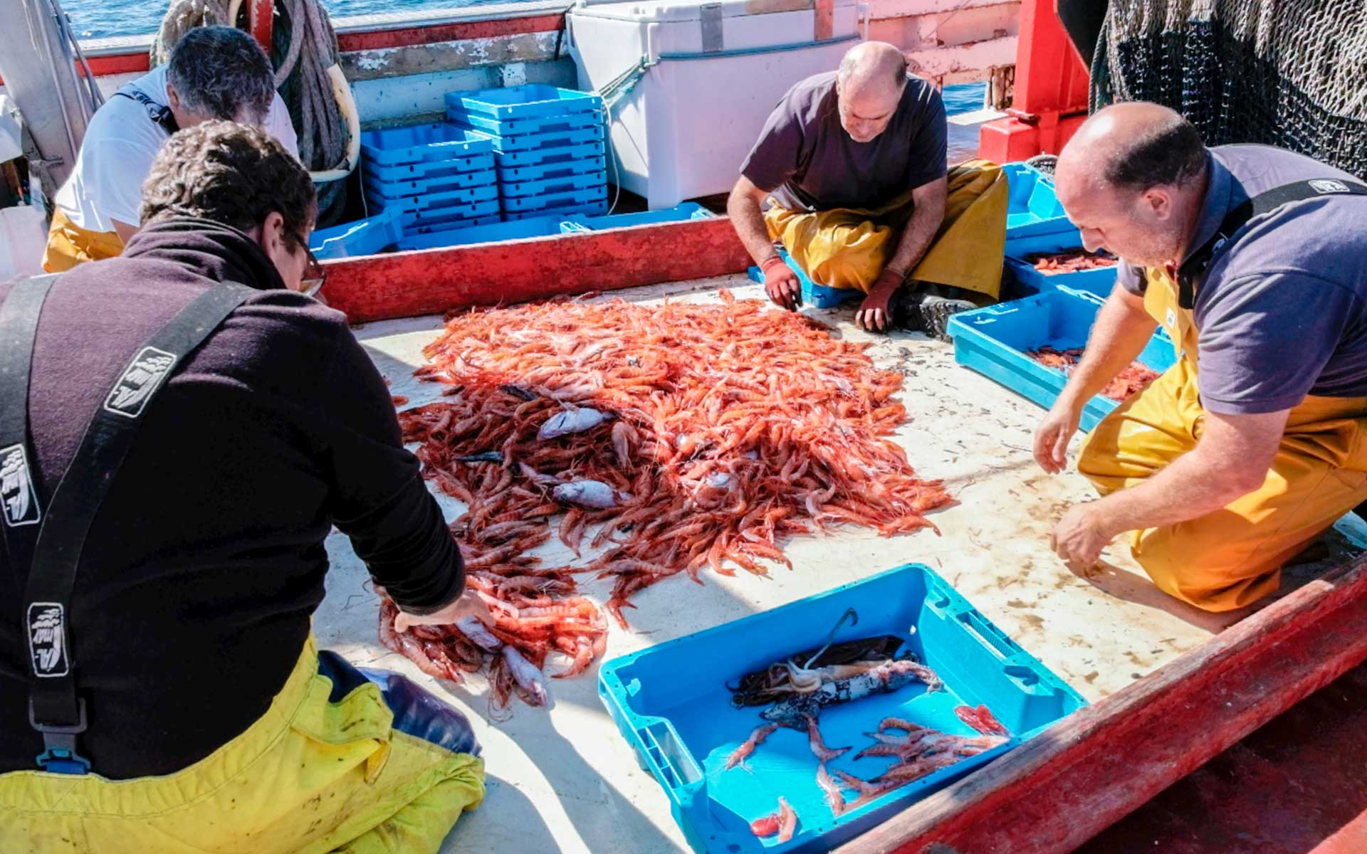 Mediterranean Fishermen working on Gamba de Palamós wild shrimp