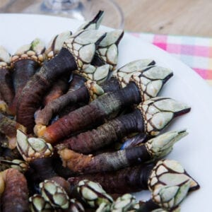 Goose barnacles on a plate precedes