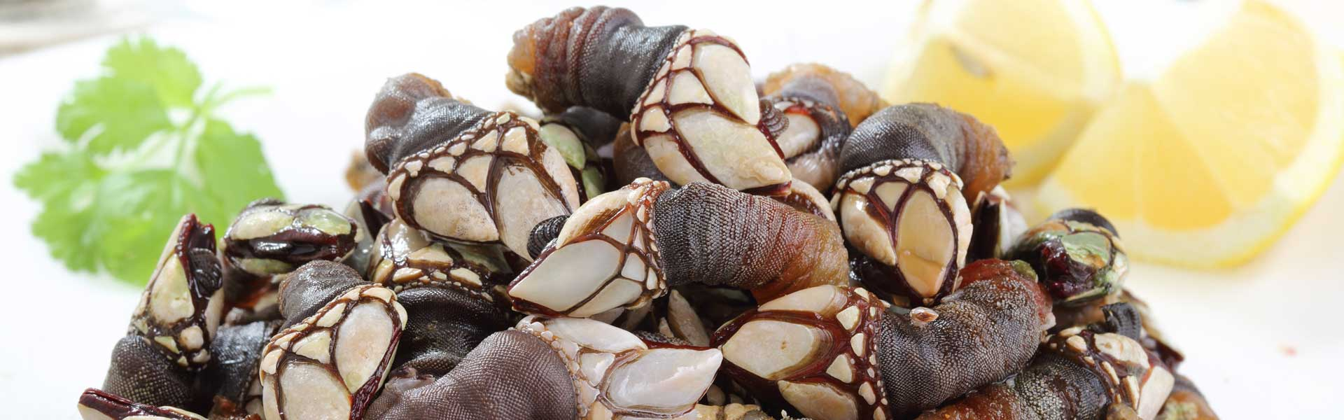 goose barnacles with bay leaves ad lemon